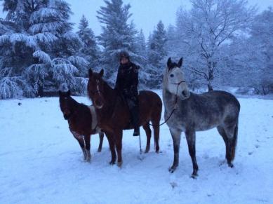 paardjes-sneeuw